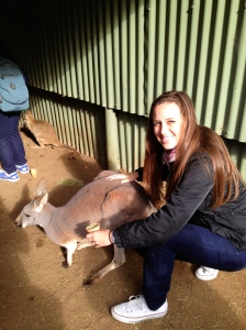 Aussie update kangaroo